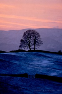05 Winter contours, Wensleydale - taken a cold early January evening. The tree was well to my left and looked dramatically stark. I moved so as to line up the gate and wall as lead ins to the tree and sky: then zoomed in on a vertical format to compress the view. My wife was not happy at the delay in getting to a tearoom in Hawes especially as it shut just before arriving. Was forgiven later as it became an international award winning slide image!